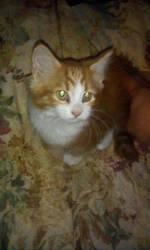 My kitten Oliver by DEMONrhino66698