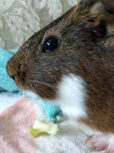 persimmon's Profile Picture