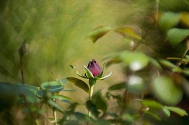 Rosebud by Blister17