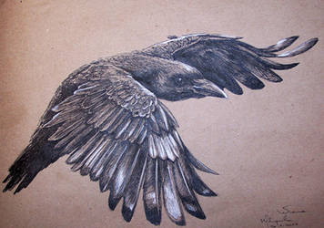 Black crow by Concini