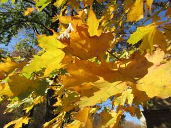 Autumn colours by scarlette13