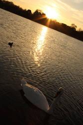 Swan by OctoberInMyHeart