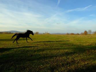 Gallop by Asshra
