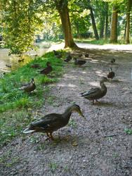 DuckWatch by Baneth