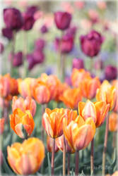 Field of Color by torifanning