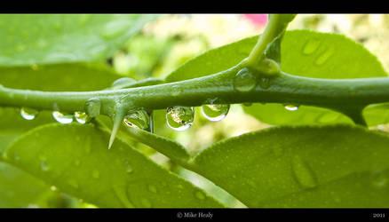 Green Drops by cranial-bore