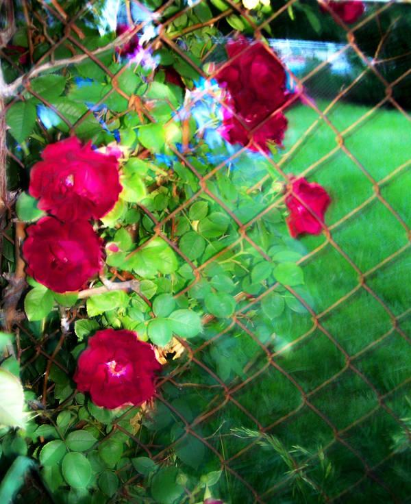 A Bed Of Roses By Redlightbluelight On Deviantart