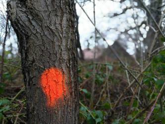 neon scars by IHanakoI