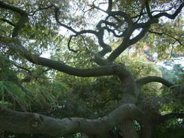 Tree 5 by bukashka