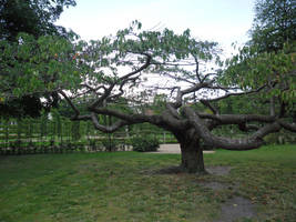 Tree 8 by bukashka