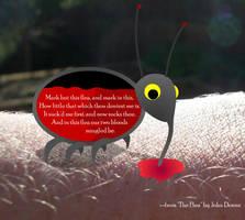 The Flea by scripturemonkey