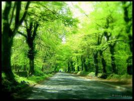 Ireland Glen by kiwineen