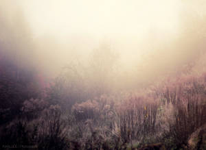 The beauty of fog. by Inkalude