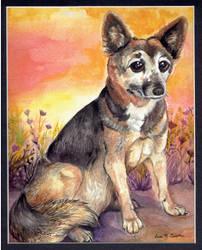 Dingo by Shadowind