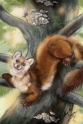 Fauna Focus Pine Marten by Shadowind