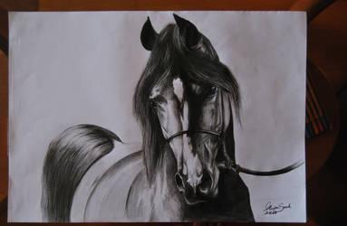 Sketch - Arabian Horse by Szeni1993