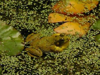 Frog Midcroak by Jyl22075