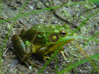 Frog! 3 by Jyl22075