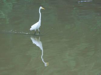 Crane Reflection by Jyl22075