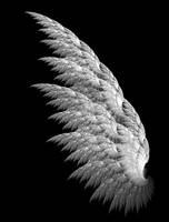 White Fractal Angel Wing by Shadoweddancer