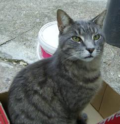 .:cat in the box by medicman4444