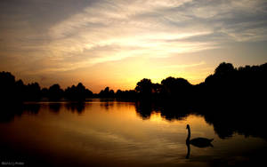 Swan on a lake by deJoschi