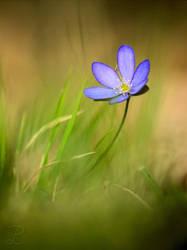 Spring flowers 1 by da-phil
