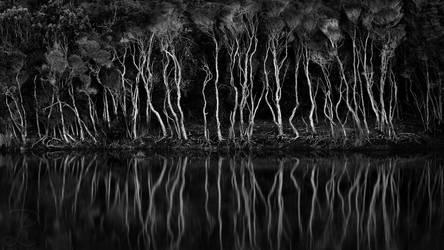Bizarre Trees 2 by da-phil