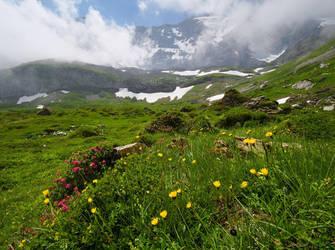 Wild Flowers by da-phil