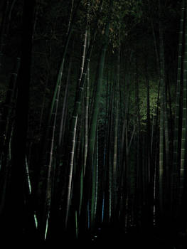 Bamboo Forest by Night by Lissou-photography