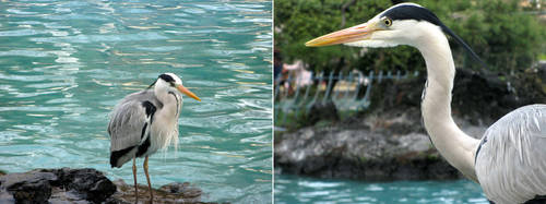 Heron in a Zoo by Lissou-photography