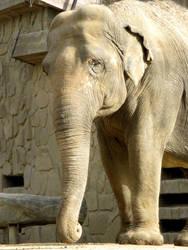 Sad Elephant by Lissou-photography