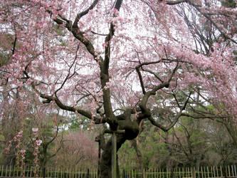 Majestic and Beautiful Pink Tree by Lissou-photography