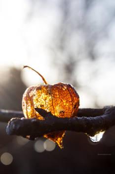 Morning Lampion by HackingDutchman