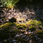 Forest floor by HackingDutchman