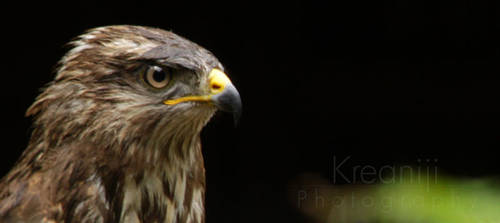 watchman by Kreaniji-PHOTOGRAPHY