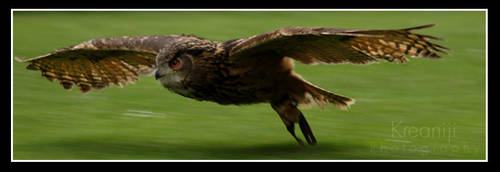 Owl by Kreaniji-PHOTOGRAPHY