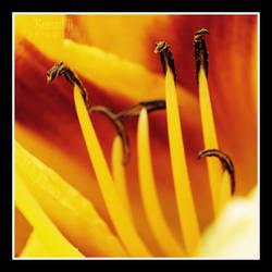 Lily by Kreaniji-PHOTOGRAPHY