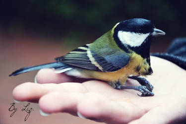 Bird. by LizAlasca