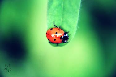 Beetle. by LizAlasca