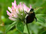 Beetle by HonestScribe