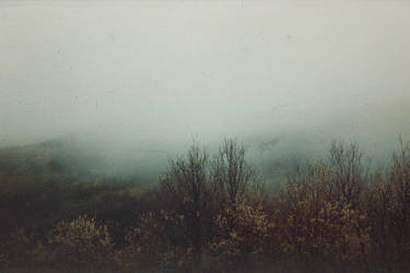 fog.. by samichettouh