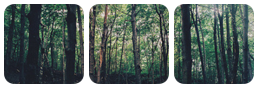 +Woods+ by Redkuu