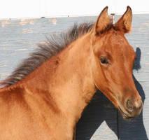 095 : Foal Head Angle by Nylak-Stock