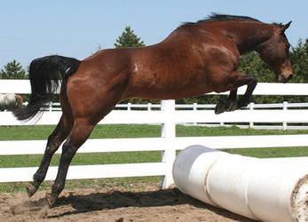 136 : Jump by Nylak-Stock
