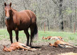 052 : Foal Massacre by Nylak-Stock