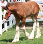 079 : Foal Walk by Nylak-Stock