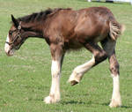 080 : Foal Kick by Nylak-Stock