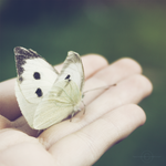 Please Fly Away.. by Kezzi-Rose