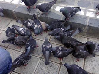 Brasov Birds by Dark-Devil-Fox